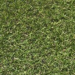 Umělá tráva Springtime 634